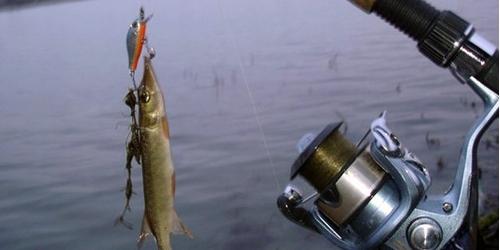 ловля рыбы по болгарски